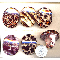 ANIMAL PRINT BIG ACRYLIC RING